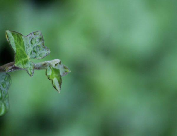 gedicht natuur