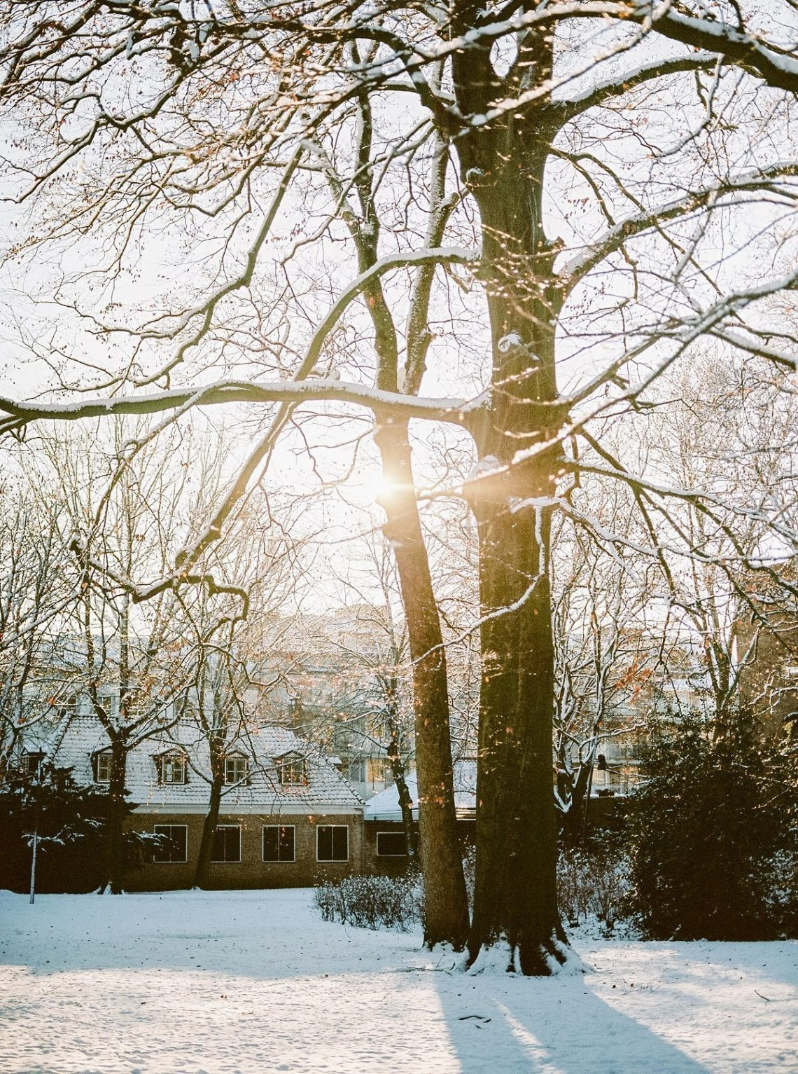 stralende winter