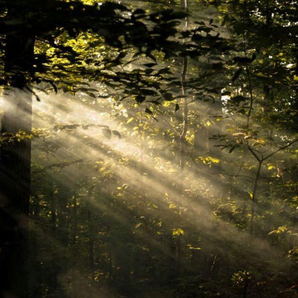 stiltedag in de natuur retraite